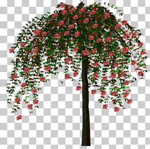 Twig Tree Forest Tour D'arbre PNG
