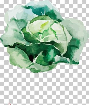 Root Vegetables Watercolor Painting Drawing Illustration PNG
