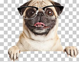 Pug French Bulldog Puppy Stock Photography PNG