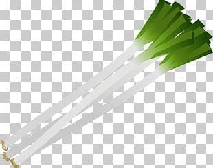 Allium Fistulosum Vegetable Leaf Salad PNG