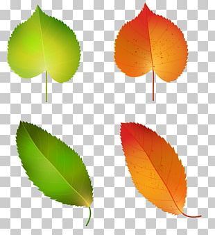Autumn Leaf Color Green Yellow PNG
