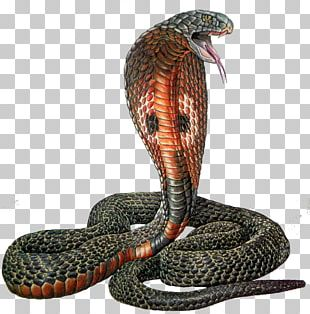 Rattlesnake Reptile Indian Cobra PNG