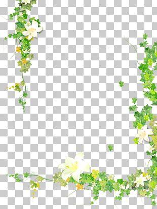 Leaf Plant Flower Vine PNG