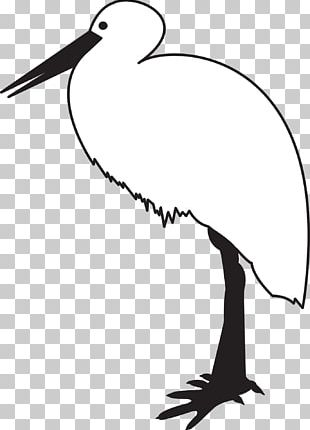 White Stork Bird Black Stork Black And White PNG