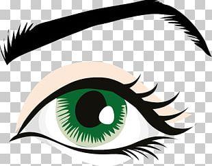 Human Eye Eye Color PNG
