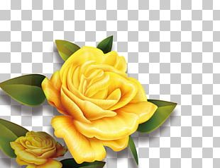 Rose Yellow Flower High-definition Television PNG
