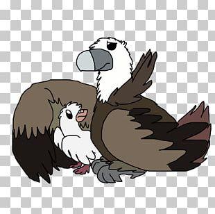 Owl Beak Feather PNG
