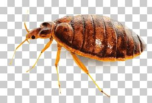 Large Bed Bug PNG