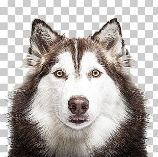 Siberian Husky Bed Sheet Bedding Duvet Pillow PNG