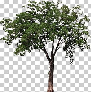 House Room Tree Porch Box PNG