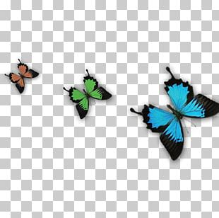 Butterfly Transparency And Translucency Blue PNG