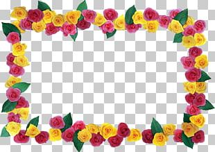 Cut Flowers Petal Floral Design Beach Rose PNG