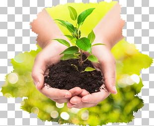Plant Stock Photography Business Hand PNG