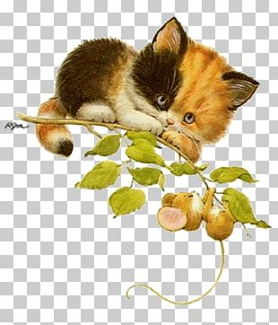 Kitten Whiskers Cat Mouse PNG