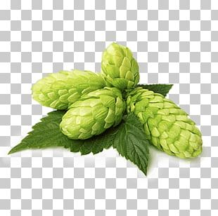 Beer Lager Common Hop Brown Ale PNG