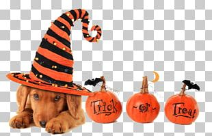 Dog Halloween Trick-or-treating Pet Cat PNG