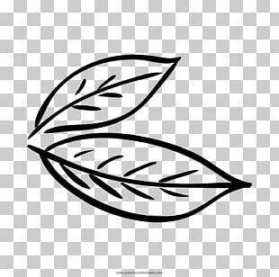 Bay Leaf Coloring Book Drawing Bay Laurel PNG