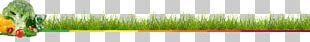 Wheatgrass Close-up Leaf Plant Stem Line PNG