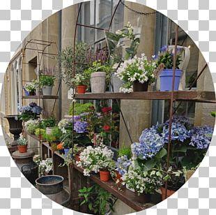 Floral Design Window Flowerpot Flowering Plant Houseplant PNG