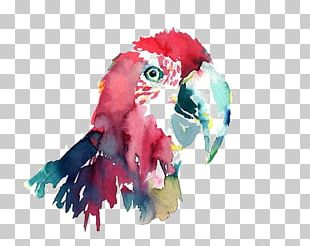 Parrot Bird Macaw Watercolor Painting PNG