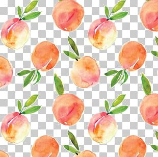Peach Watercolor Painting Drawing PNG