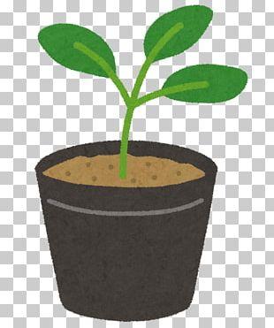 苗木 夏野菜 Tomato Loquat Grafting PNG