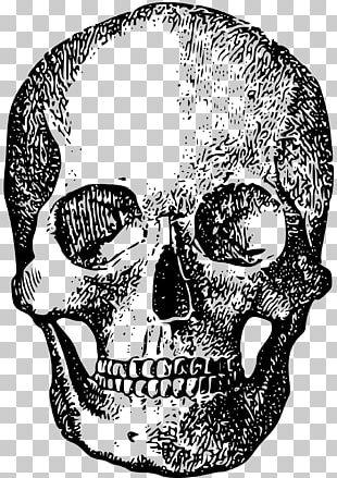 Skull Human Skeleton Bone PNG
