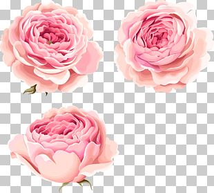 Hand-painted Beautiful Pink Peony Flowers PNG