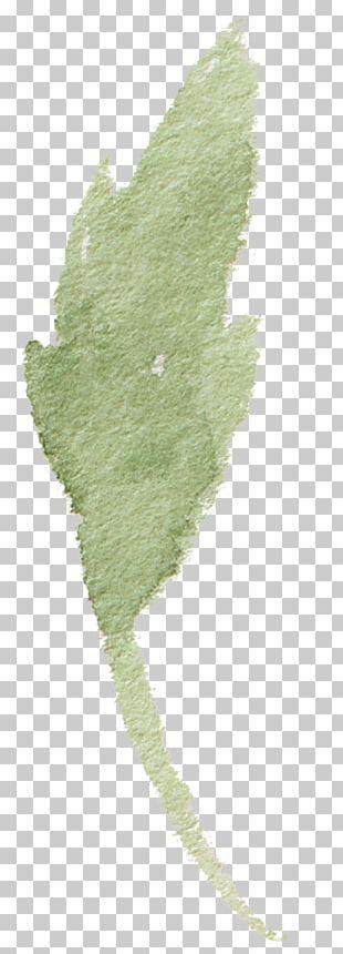 Leaf Icon PNG