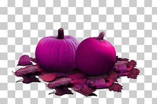 Jps Berry And Pumpkin Patch Halloween PNG