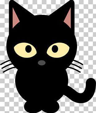 Black Cat Kitten PNG