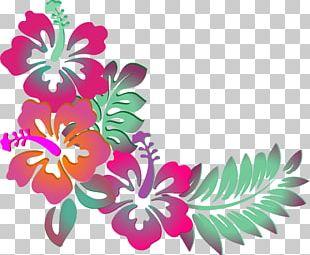 Hawaiian Hibiscus Shoeblackplant Flower PNG