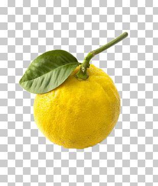 Citrus Junos Lemon Mandarin Orange Bergamot Orange Rangpur PNG