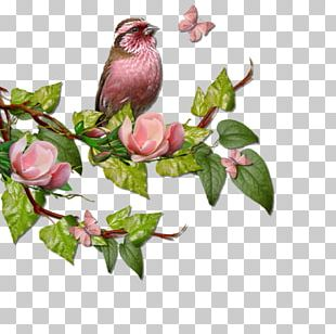 Bird In The Tree Branch PNG