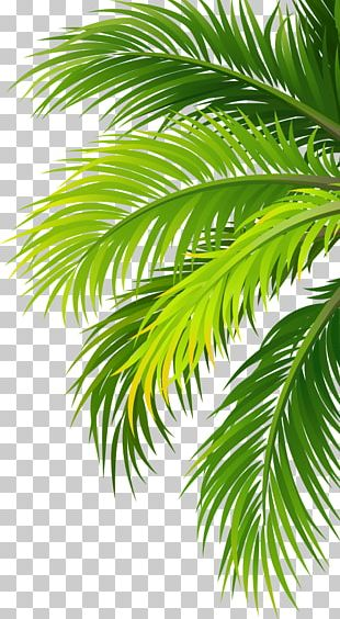 Coconut Water Air Filter Plant PNG