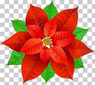 Poinsettia Bowl PNG