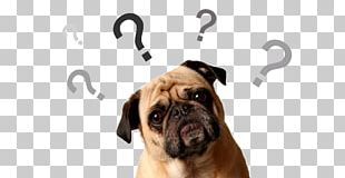 Dog Collar Pet Sitting Veterinarian PNG