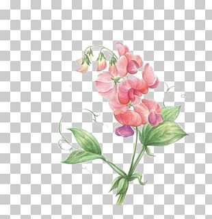 Sweet Pea Flower Icon PNG