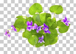 Violet Stock Photography PNG