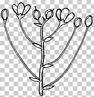 Bud Flower Rose PNG
