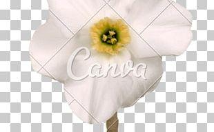Petal Cut Flowers Flowering Plant PNG