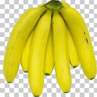 Saba Banana Cooking Banana Banana Flavored Milk Pisang Goreng PNG