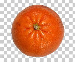Clementine Mandarin Orange Tangerine Tangelo Rangpur PNG