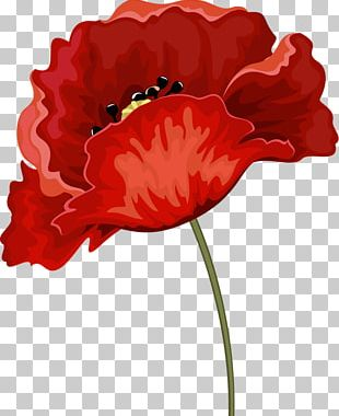 Common Poppy Red Rhododendron Flower PNG