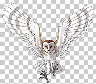 Owl Line Art Beak Feather PNG