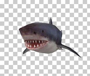 Tiger Shark Requiem Shark PNG