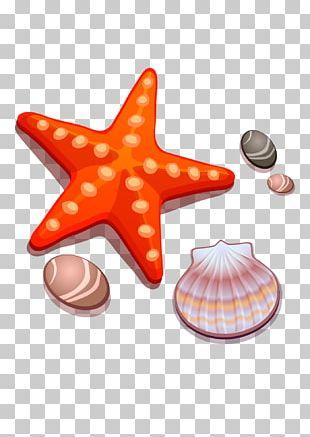 Drawing Cartoon Starfish Seashell PNG
