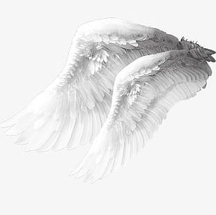 Angel Wings Material PNG
