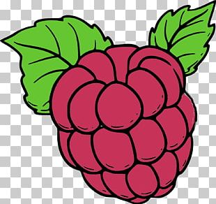Coloring Book Drawing Red Raspberry Fruit PNG