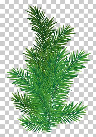 Tree Branch Scots Pine PNG